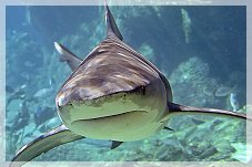 Pembrokeshire Shark Fishing Trips
